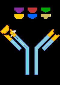 Przeciwcialo neutralizujace antibodies neutralizing