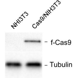 NIH3T3Cas9 Cell Line