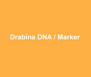ABclonal Drabina DNA / Marker